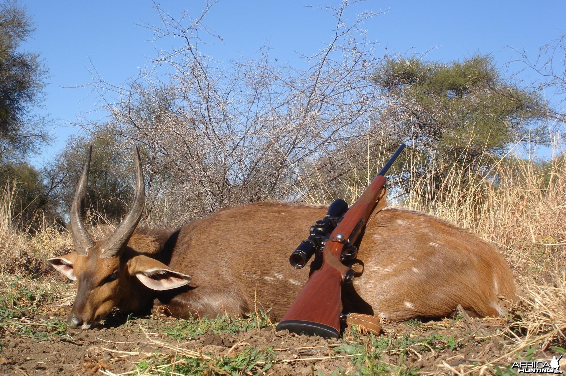Bushbuck hunt