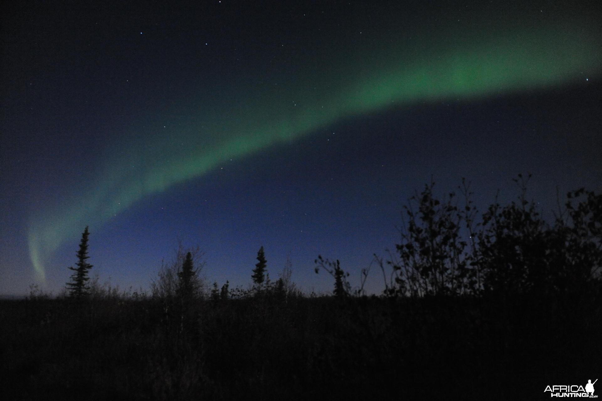Alaska Moose Hunting Evenings