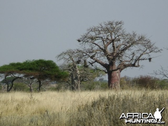 More of why I love Africa!