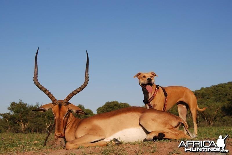 Christmas Day impala