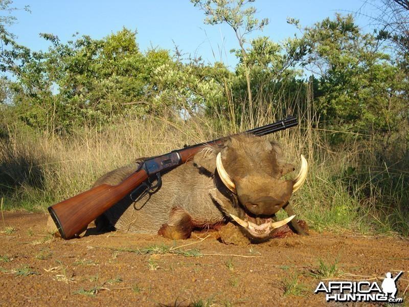 Wild West Warthog
