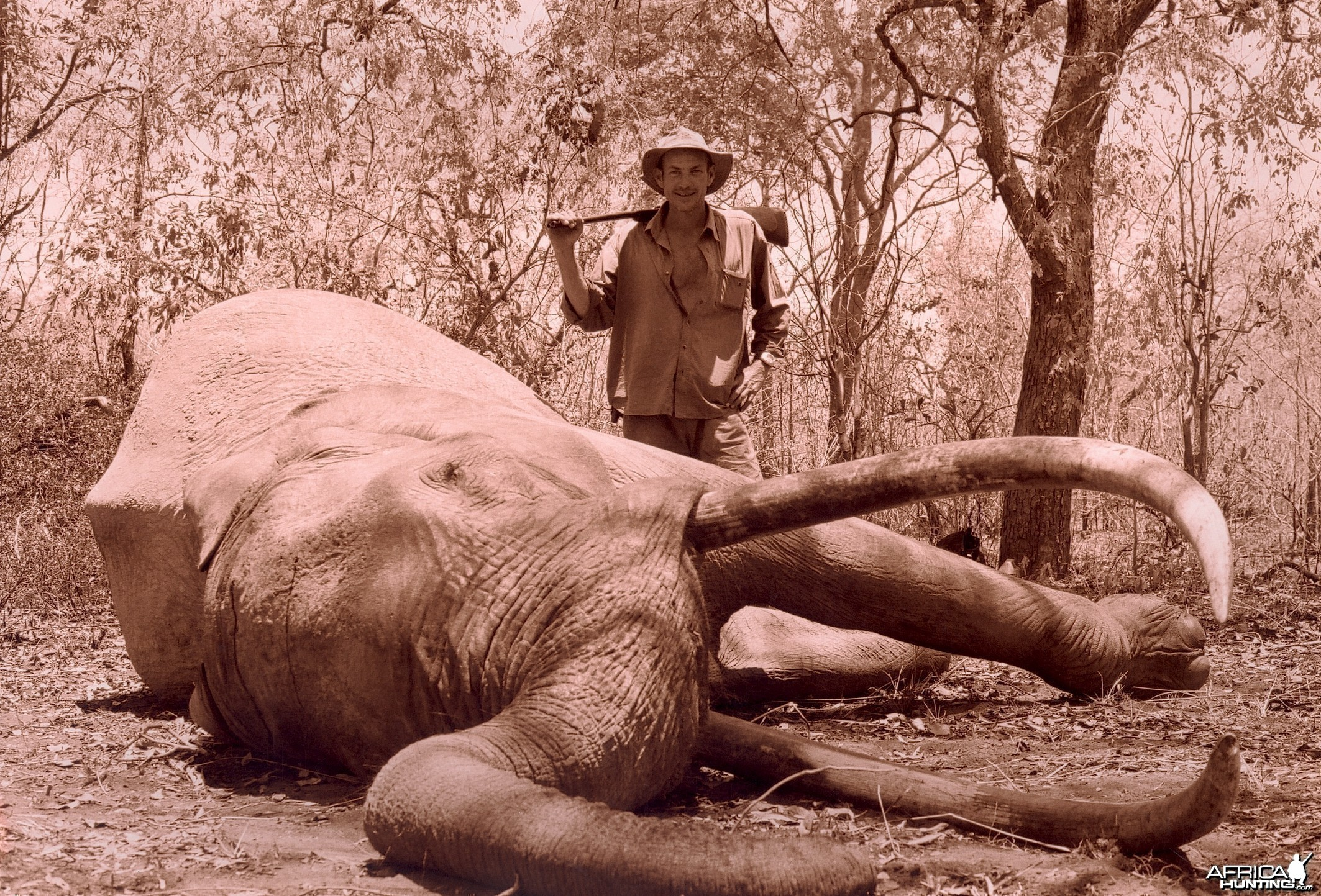 Hunting Elephant in Tanzania, 244 cm