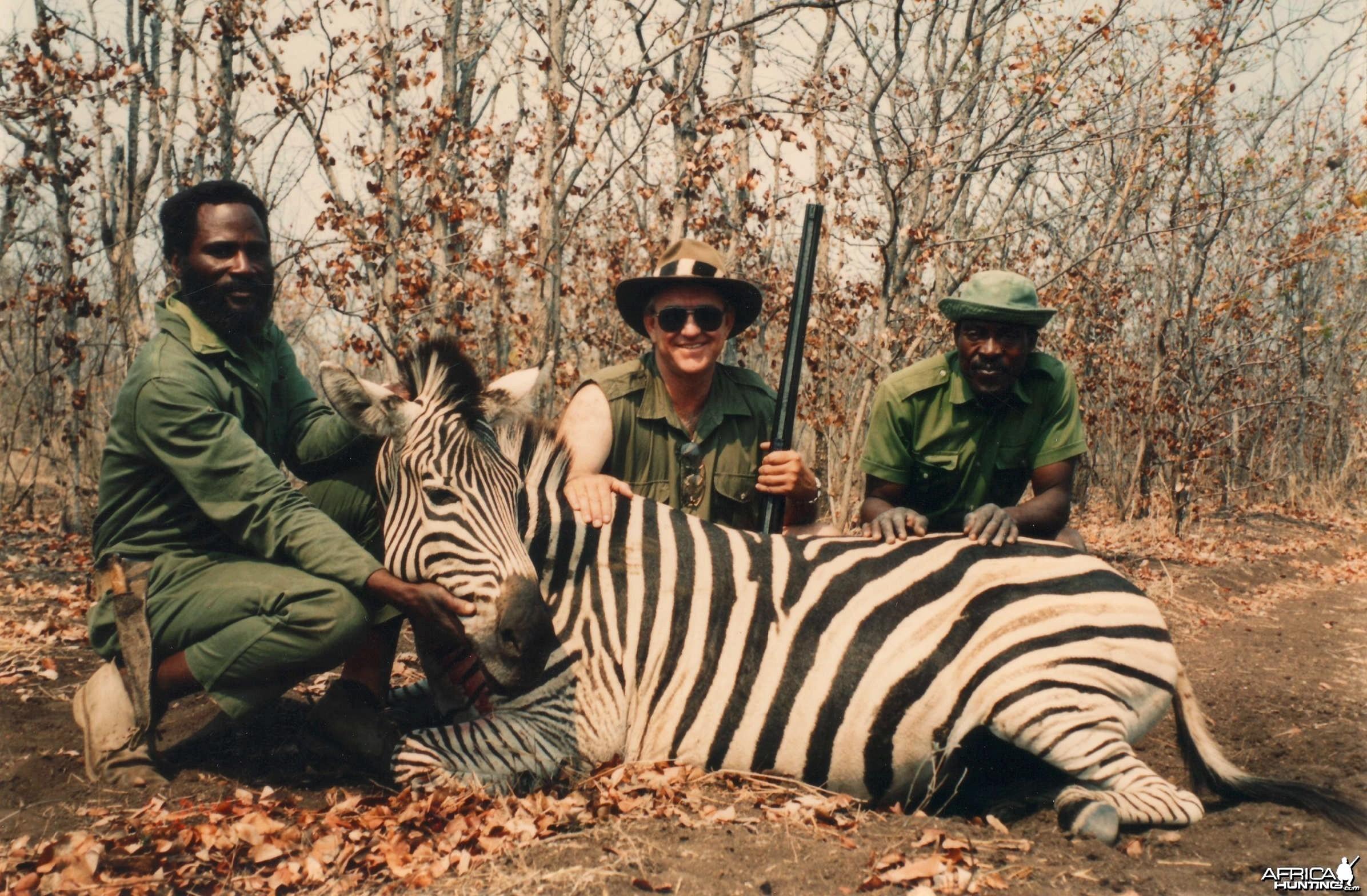 Zebra hunt Zimbabwe