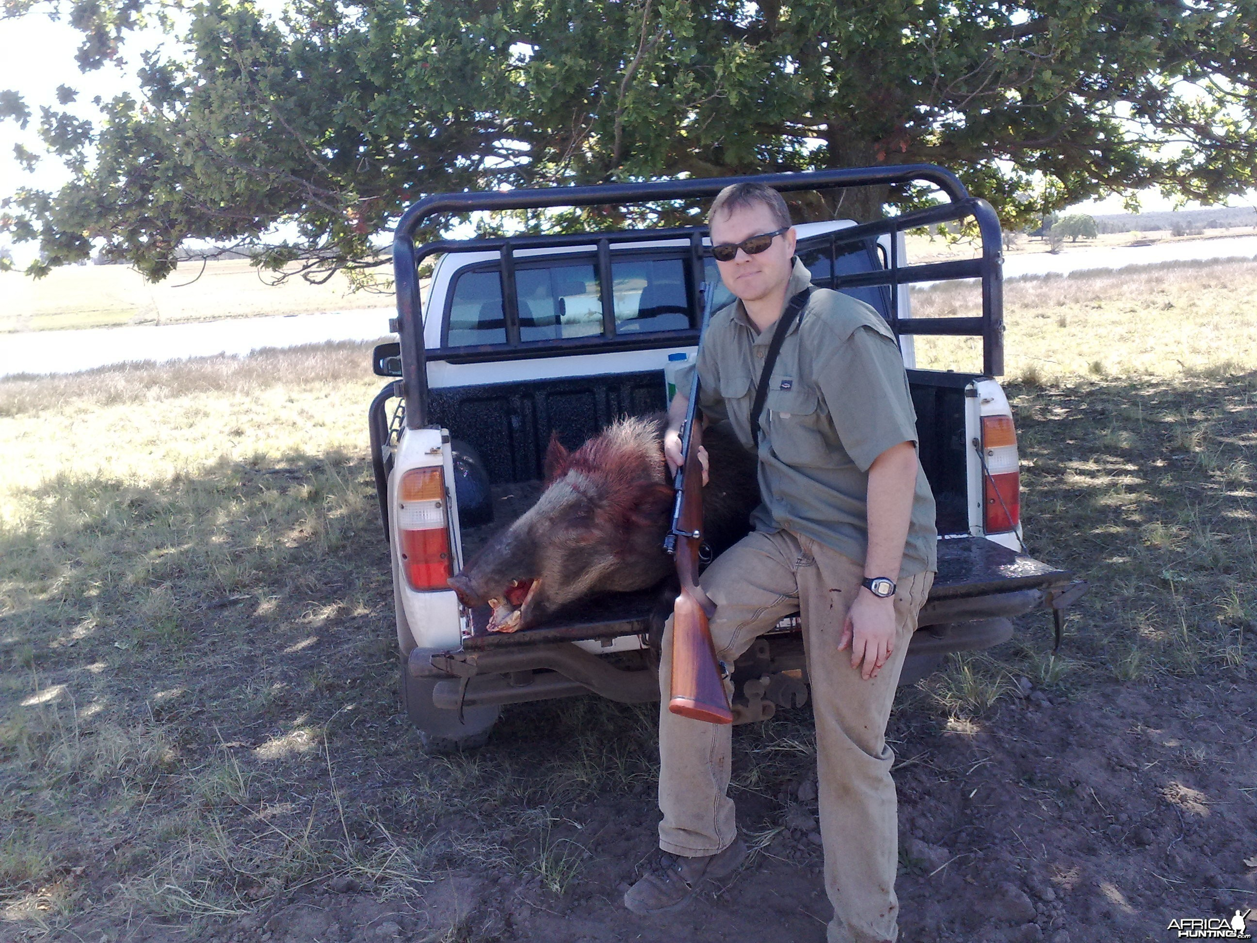 Bushpig hunted in Mpumalanga South Africa