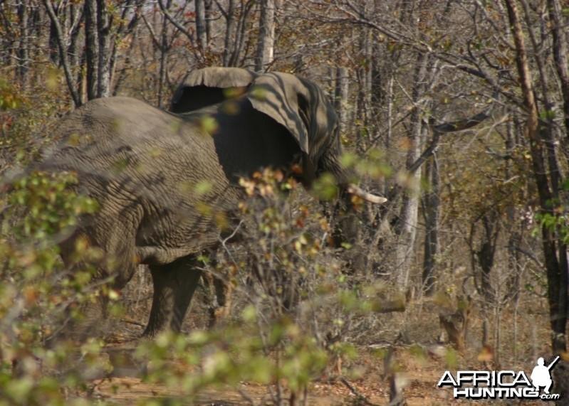 ElephantII