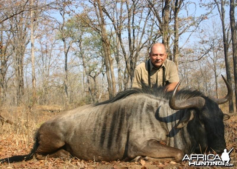 Nice wildebeest