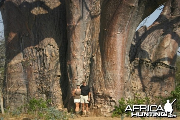 In front of a big Baobab