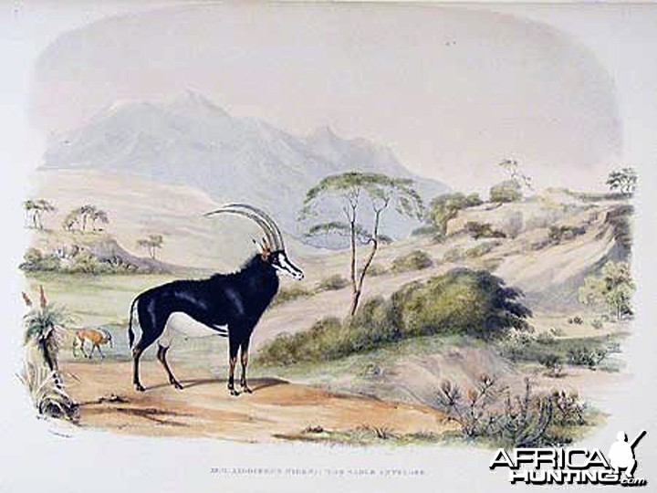 Sable Antelope by William Cornwallis Harris