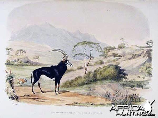 Sable Antelope by William Cornwallis Harris