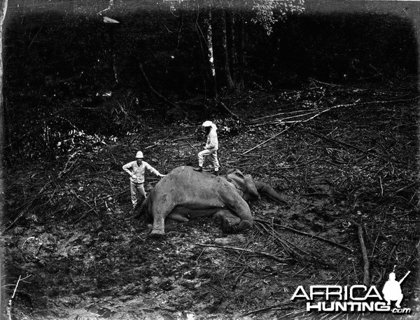 Trophy Hunting Elephant in Ceylon c.1880