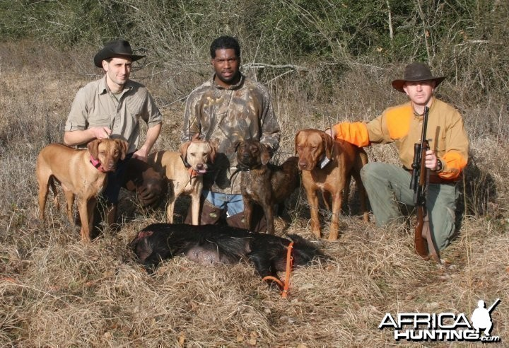 Hunting with Rhodesian Ridgeback