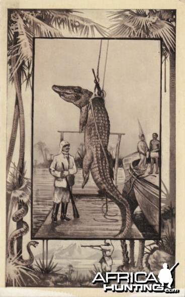 Crocodile Postcard 1909