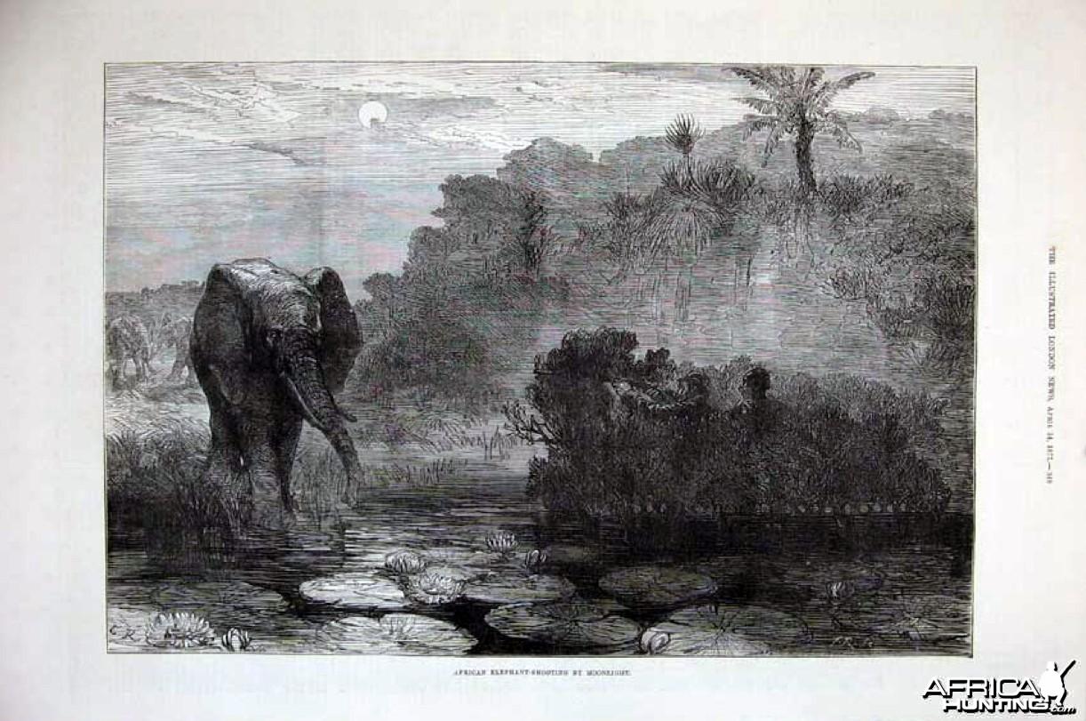 Hunting Elephant, 1877