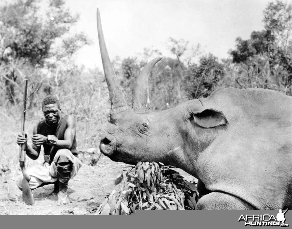 White Rhinoceros taken in Congo Belge by Herbert Lang, 1912