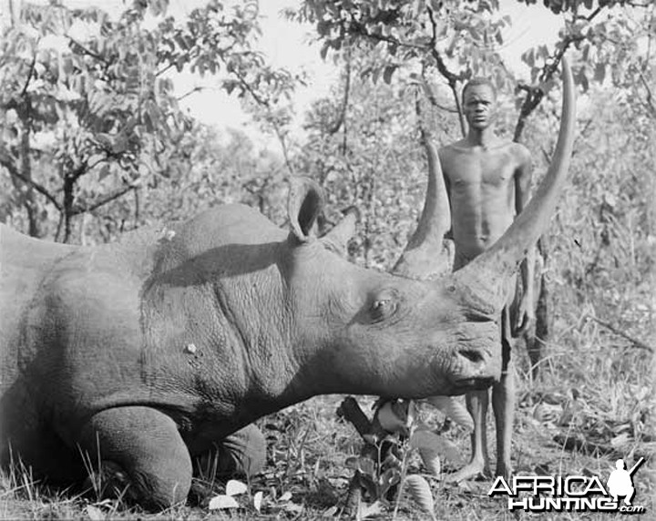 Rhino hunted in Congo