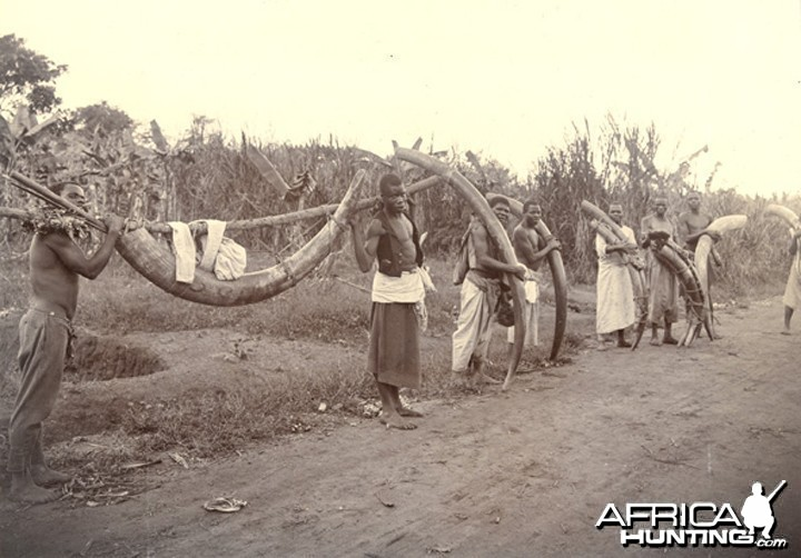 Line of porters at the roadside carrying loads of Elephant tusks