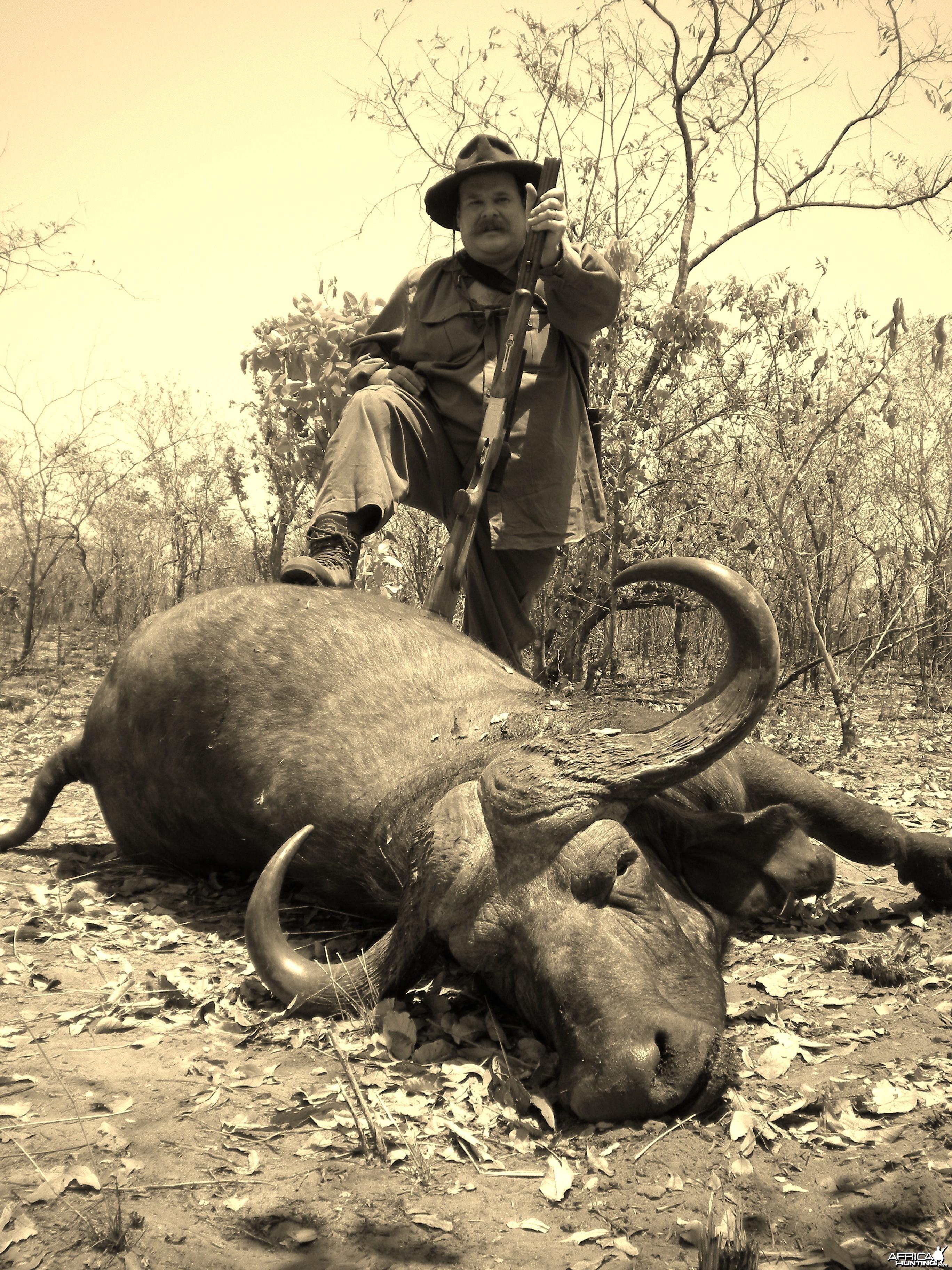 Buffalo shot two days ago in Zimbabwe