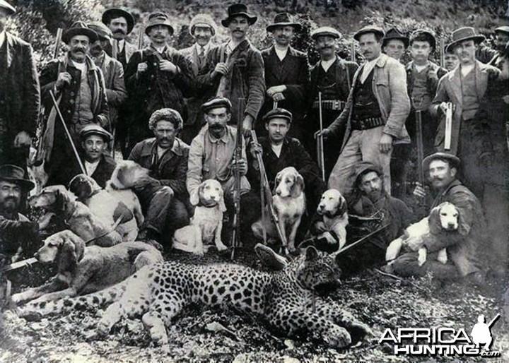 Hunting Leopard, Algeria circa 1930