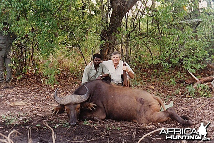 Bela Hidvegi with Dwarf Buffalo hunted in CAR