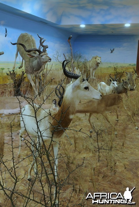 Africa Diorama at the Keszthely Hunting Museum by Bela Hidvegi