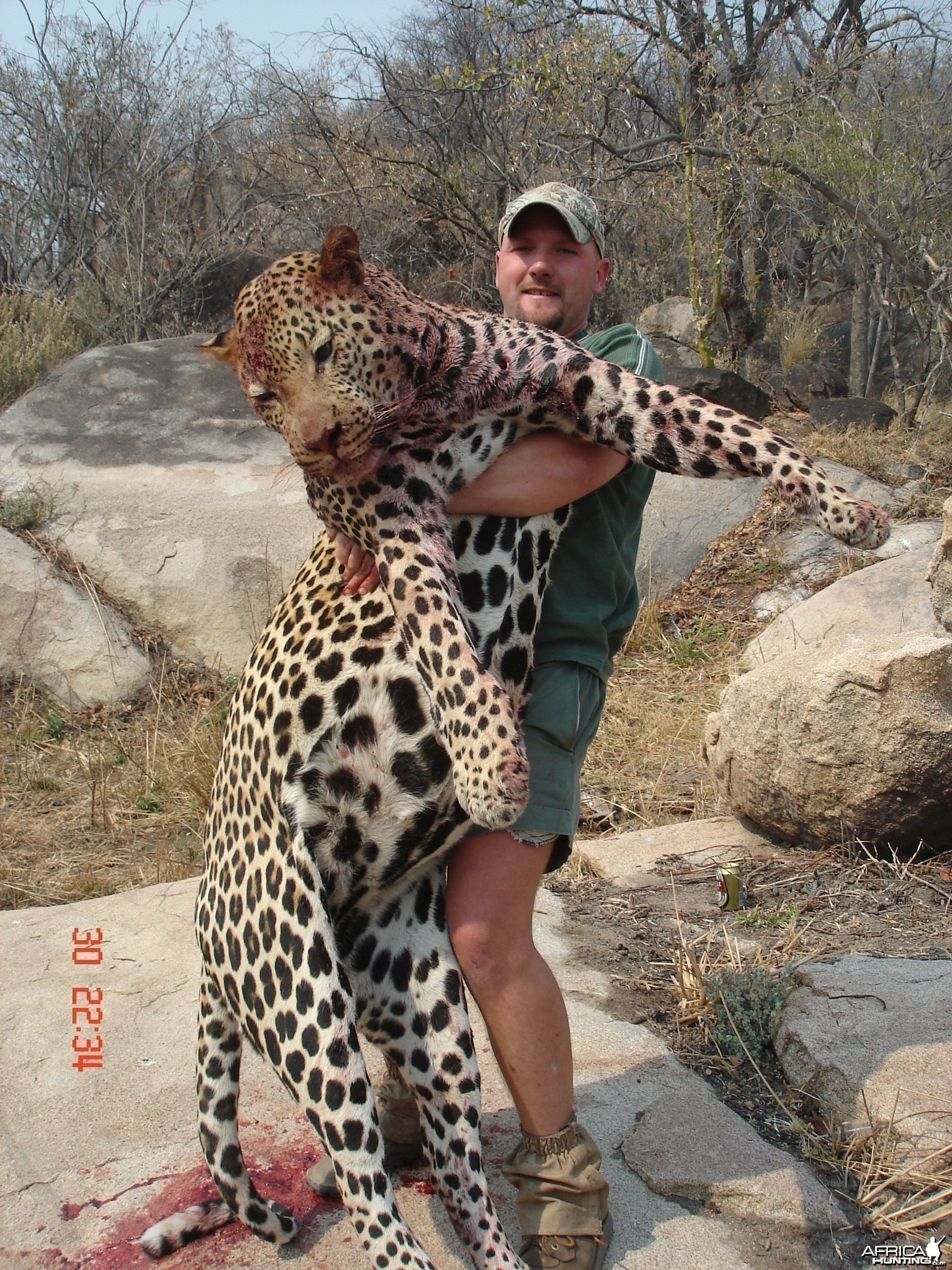 Big leopard shot in Zimbabwe