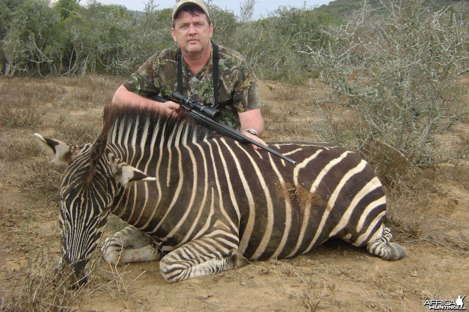 Zebra hunt Eastern Cape SA