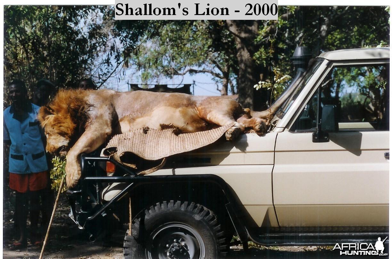 Shallom's Lion