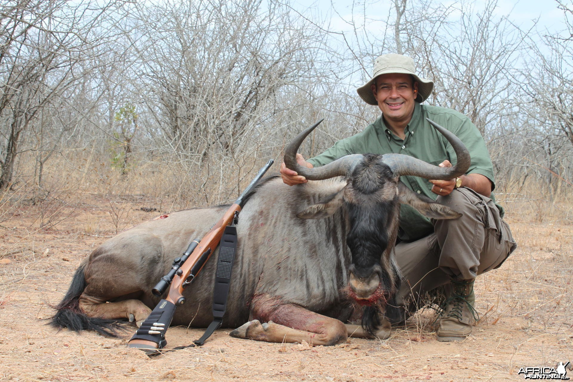 Blue Wildebeest hunted in Zimbabwe