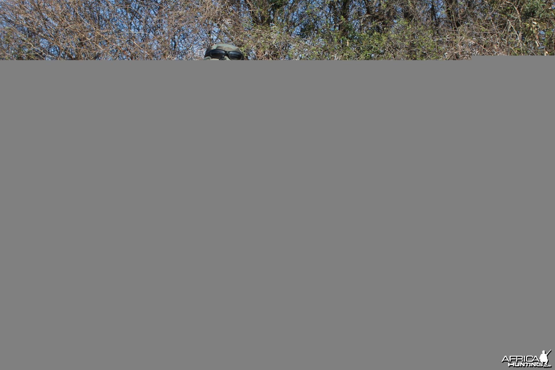 Impala hunted in Zimbabwe