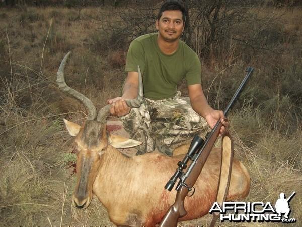 Red Hartebeest Limpopo SA