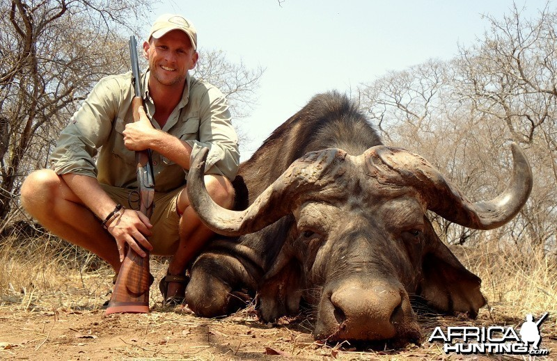 Buffalo hunted in Zimbabwe