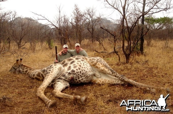 Giraffe hunted in Zimbabwe