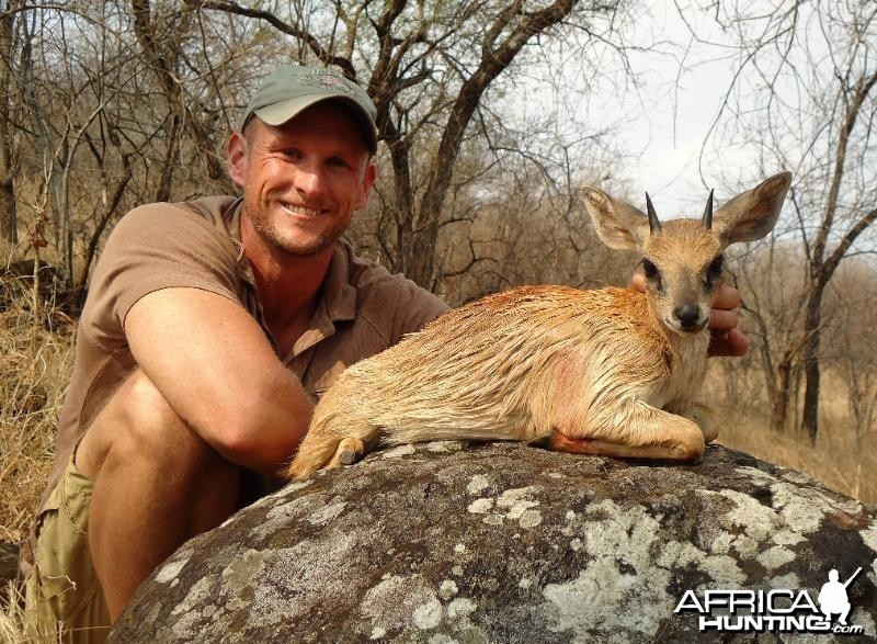 Sharp�s grysbok hunted in Zimbabwe