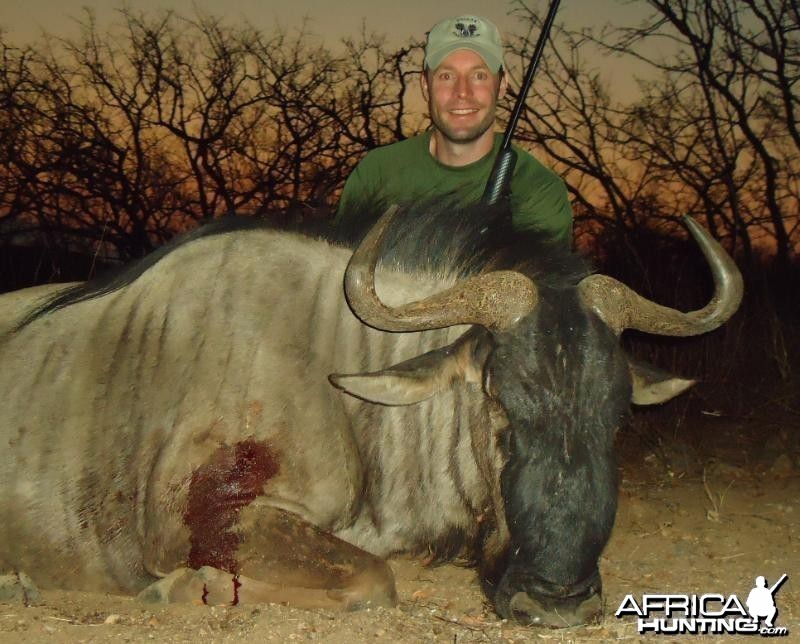 Wildebeest hunted in Zimbabwe
