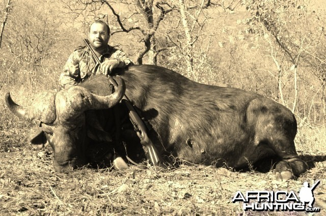 Big bossed buffalo www.lloydsafaris.co.za