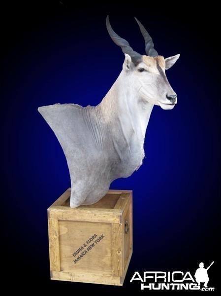Eland shoulder mount pedestal on old-fashioned shipping crate