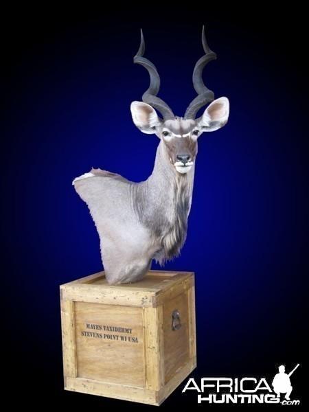 Kudu shoulder mount pedestal on old-fashioned shipping crate