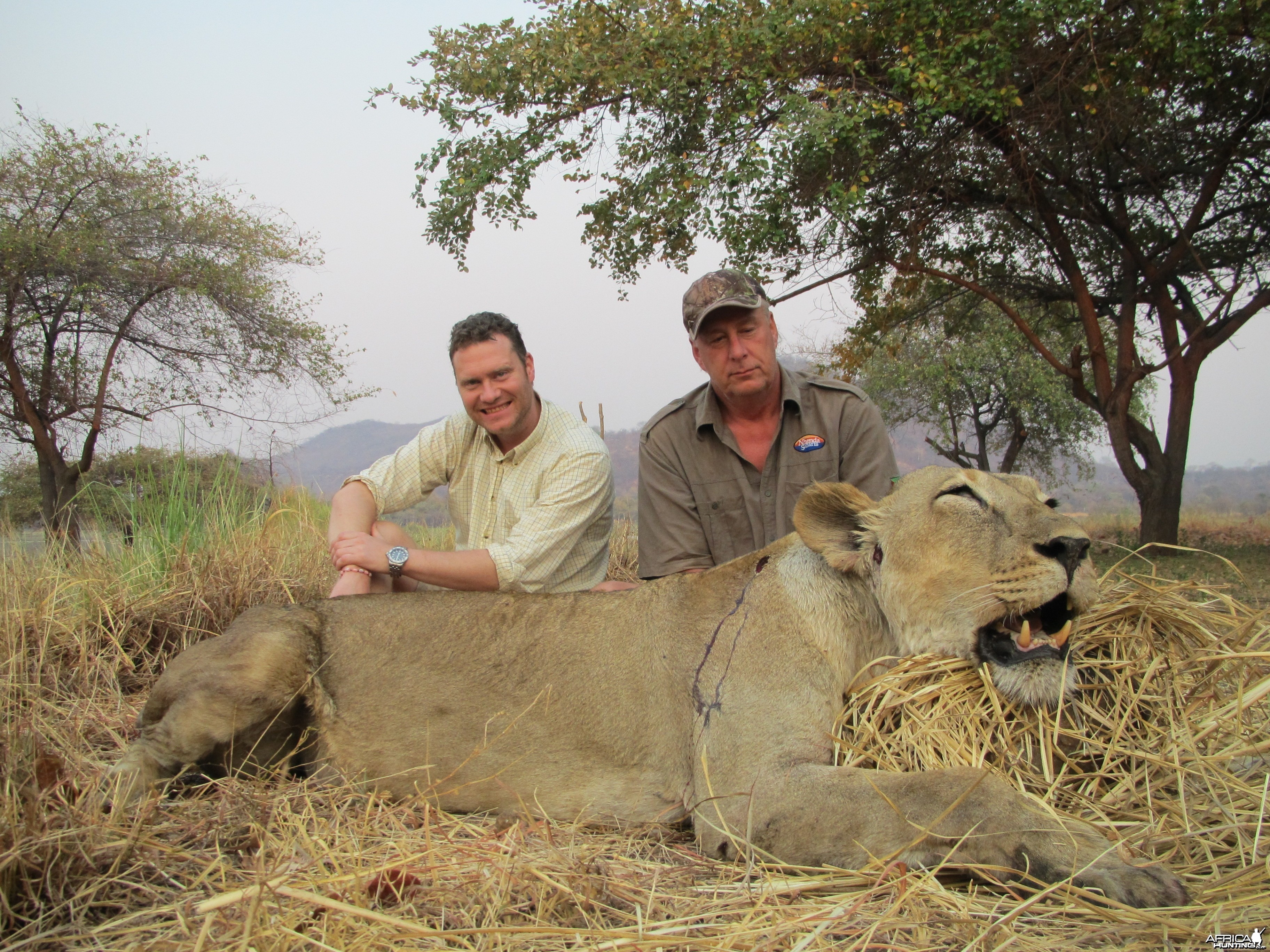 Hunting Lioness in Mozambique