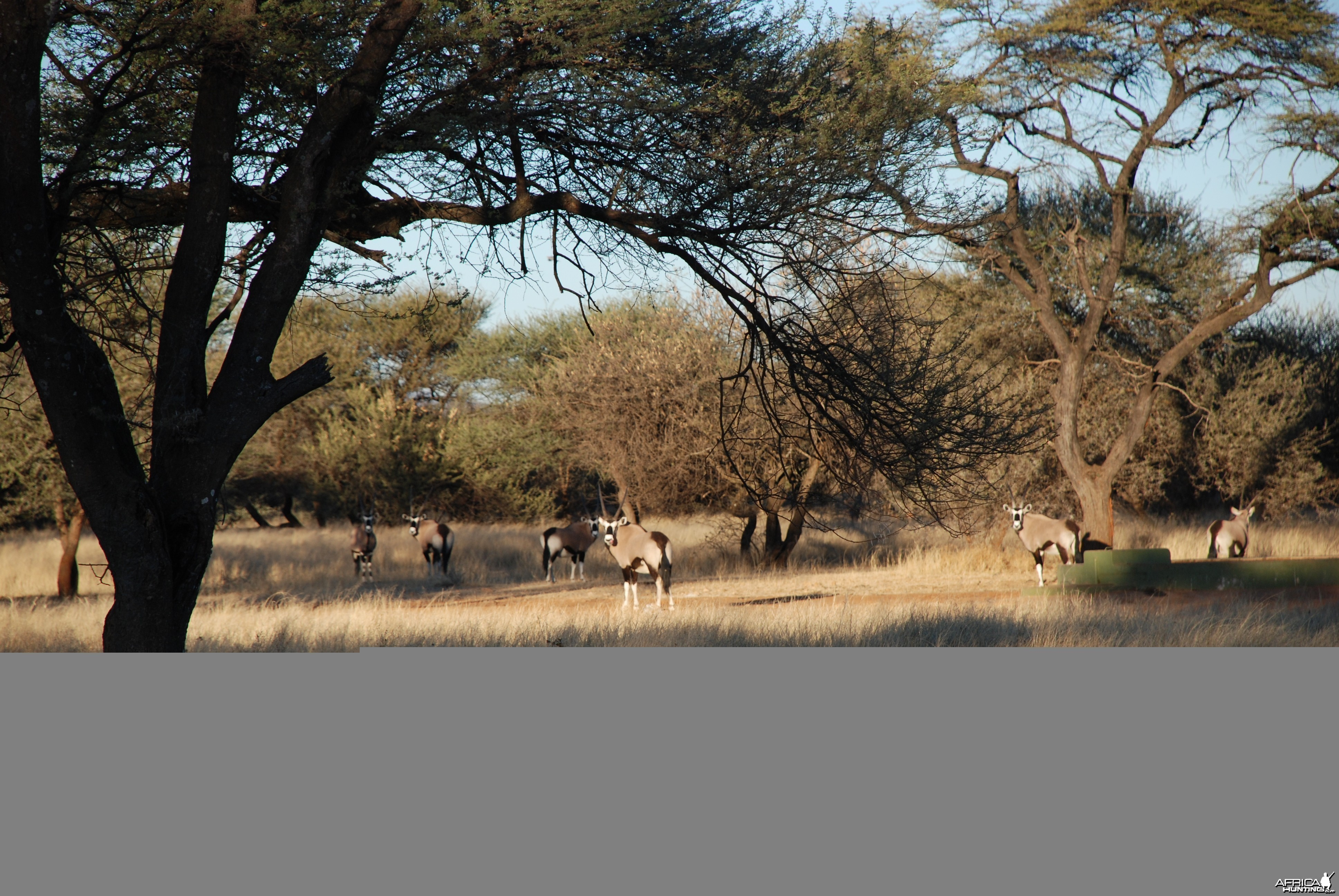 Ozondjahe Hunting Safaris