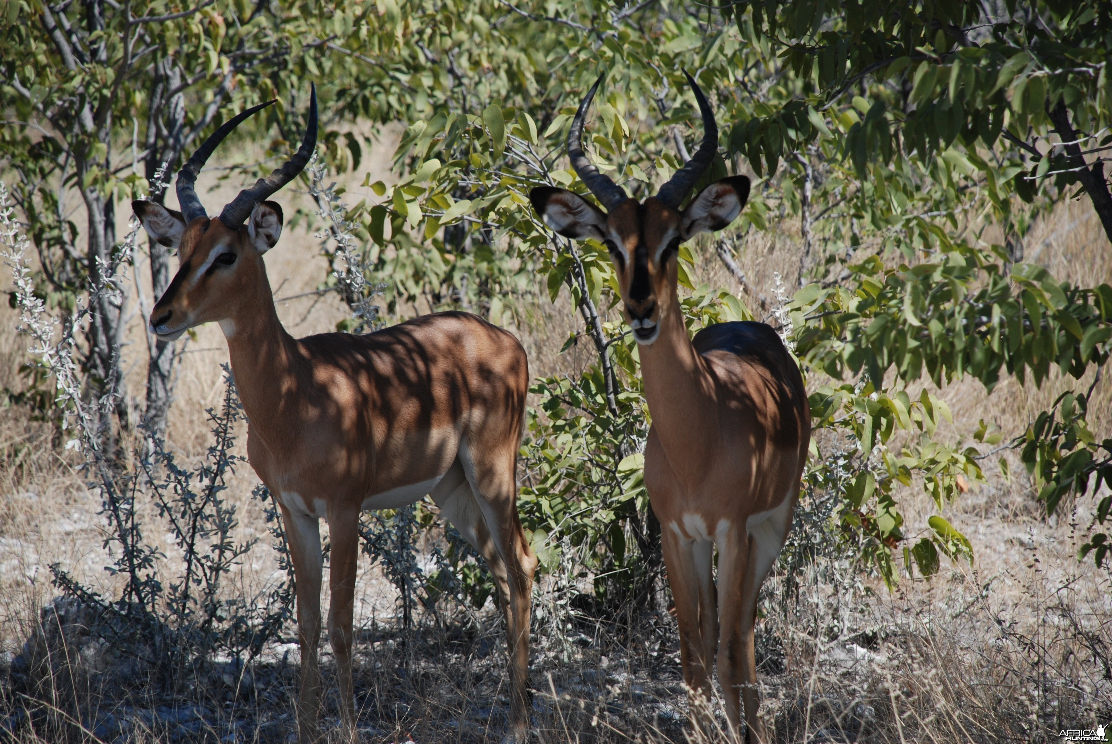 Ozondjahe Hunting Safaris, Namibia