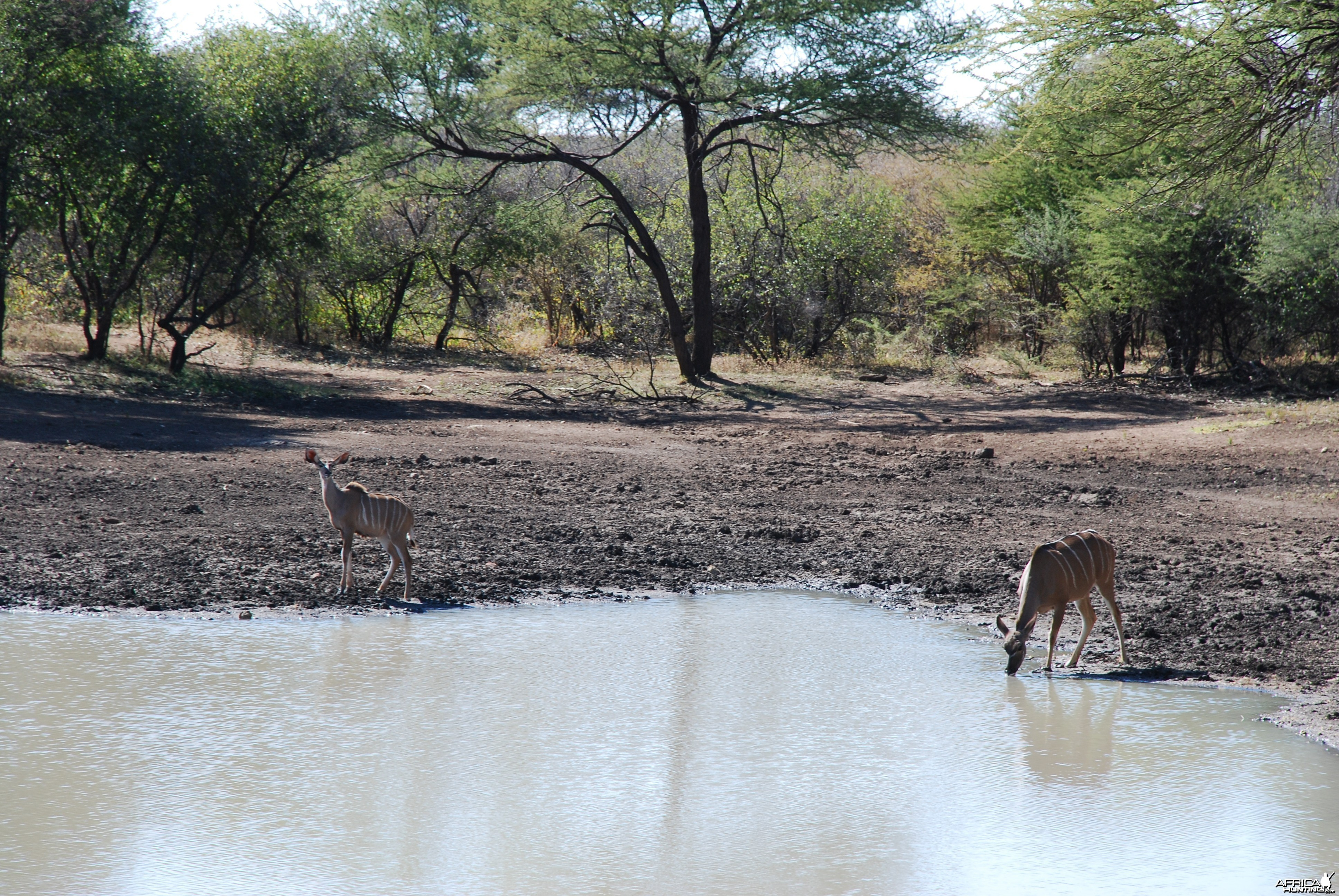 Kudu Ozondjahe Hunting Safaris, Namibia