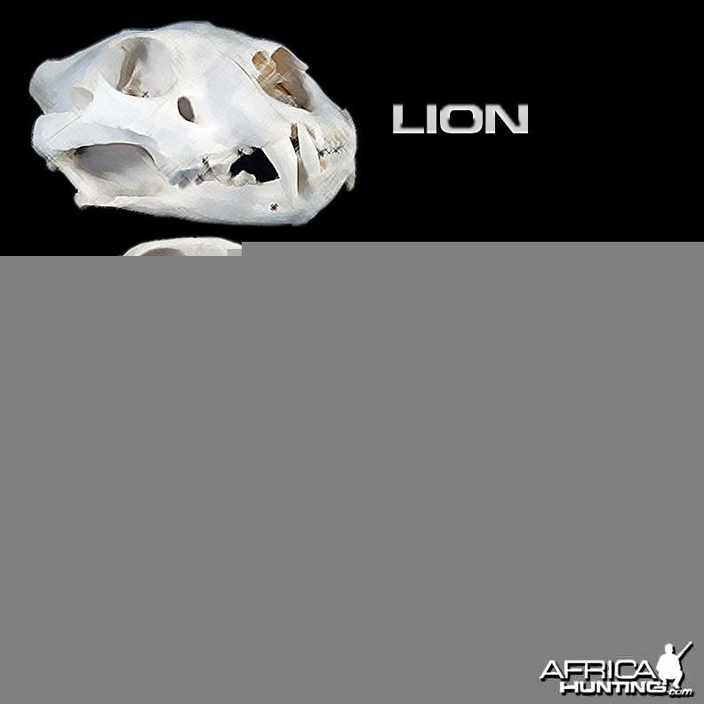 Predator Skulls