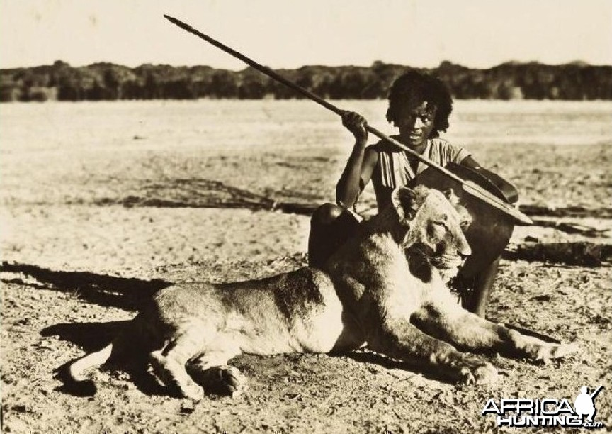 Eritrean warrior with speared young male Lion circa 1935