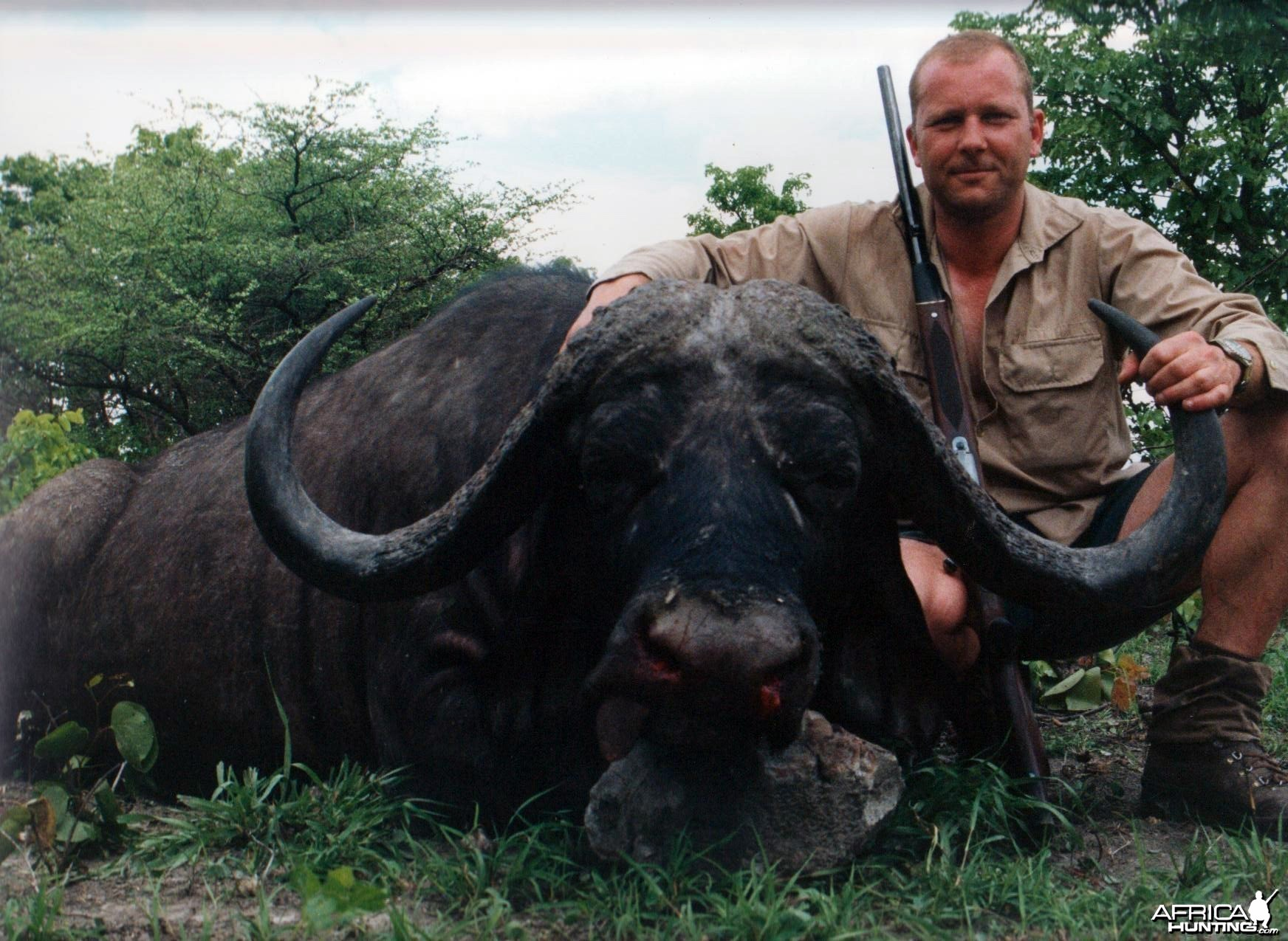 My Cape Buffalo hunted in Zimbabwe 43 inches