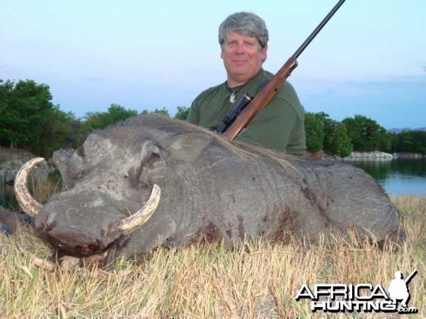 Warthog hunted in South Africa
