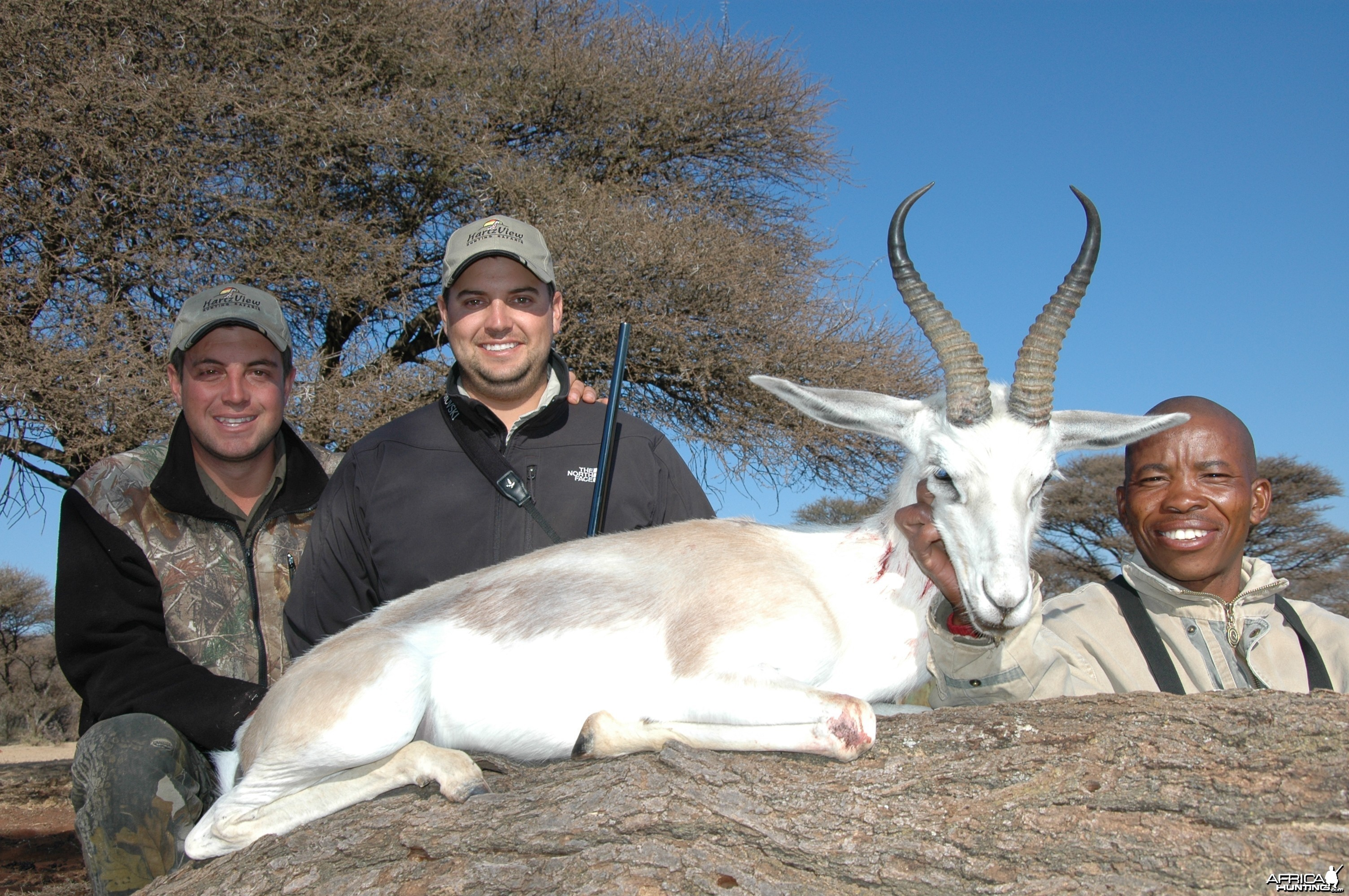 White Springbok hunted with Hartzview Hunting Safaris