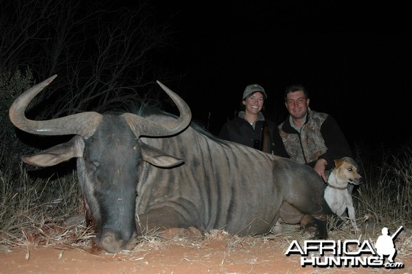 Blue Wildebeest hunted with Hartzview Hunting Safaris