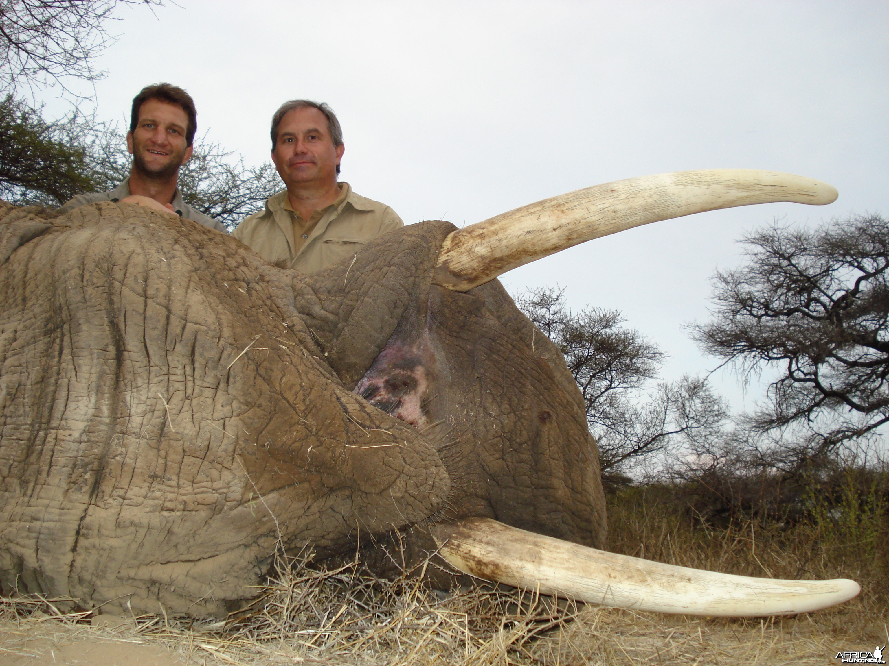 Elephant hunted in Zimbabwe with Steyn Caracal Safaris