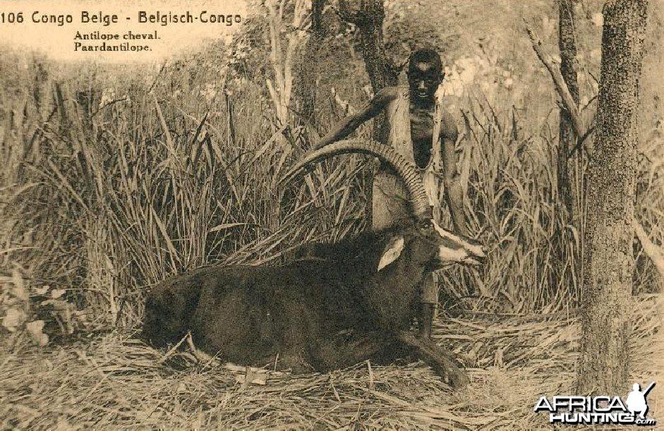 Hunting Belgian Congo, Sable Antelope
