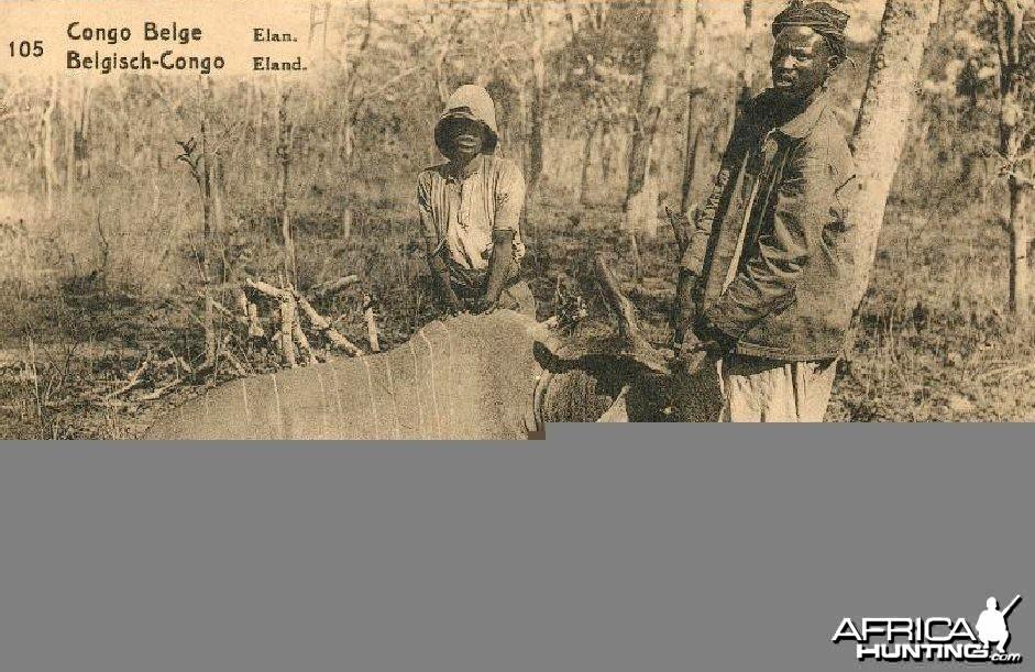 Hunting Belgian Congo, Eland